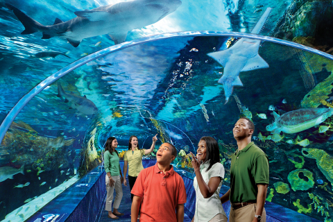 A family looks up in awe at the shark tunnel at Ripley's Aquarium of the Smokies in Gatlinburg, Tennessee, where guests staying at Xplorie participating properties can enjoy a free admission.