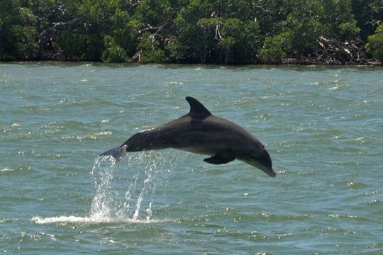 Banana-Bay-Tour-2-Hour-Dolphin-Eco-Tour