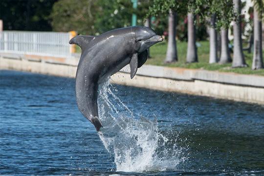 Banana-Bay-Tour-Half-Day-Eco-Dolphin-Lunch-Cruise